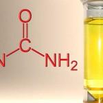urine hidrogen nitrogen