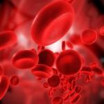 sel darah manusia
